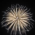 一眼レフで初めて花火の写真を撮る!